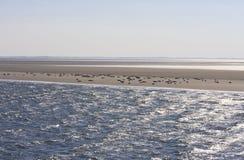 Seals upon sand bench between Terschelling and Ameland stock image