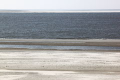 Seals upon sandbank near Hollum, Ameland Royalty Free Stock Images