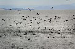 Seals and Seagulls Activity Stock Photos