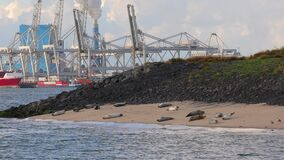 Seals in the port of Rotterdam stock video