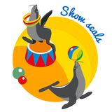 Seals Show Round Design Concept. With circus animals balancing ball on nose and rotating hoop around neck isometric vector illustration Stock Photos