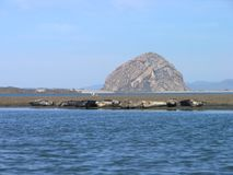 Seals Sun Bathers. Seals gather in the sun with Morro rock in the background Royalty Free Stock Photography
