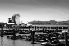 Seals sunbathing on dock Royalty Free Stock Photos