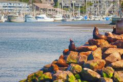 Seals Sunning On Rocks In Newport Oregon Stock Photography