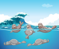 Seals swimming in the ocean. Illustration Royalty Free Stock Photography