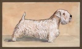 Sealyham-τεριέ που σύρεται στο watercolor στο σχεδιάγραμμα στοκ φωτογραφία