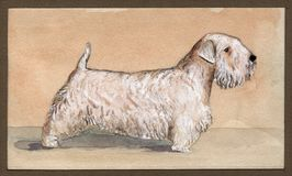 Sealyham-terrier drawn in watercolor in profile Stock Photography