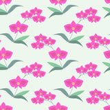 Seamle orchids pattern Stock Photos