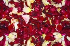Seamles übernatürlicher Rose Blumenblatt-Hintergrund Lizenzfreie Stockbilder