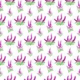 Seamles lawendy wzór Obrazy Stock