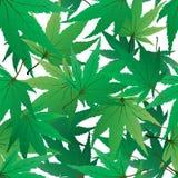 Seamles maple leaves Stock Photos