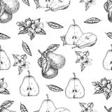 Seamles pattern vector hand made sketch illustration of engraving pear Royalty Free Stock Photos