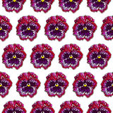 Seamles pattern wich pansies Royalty Free Stock Photography