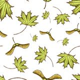 Seamles scolored maple leaf and seeds pattern. vintage colored engraved illustration of maple leaf. Green leaf on begie background