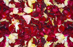 Seamles Supernatural Rose Petals Background Royalty Free Stock Images