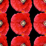 Seamless abstract background pattern large poppies. Beautiful red poppy Papaver rhoeas spring flower seamless pattern of red poppies on black background. Digital stock photography