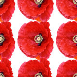 Seamless abstract background pattern large poppies. Beautiful red poppy Papaver rhoeas spring flower seamless pattern of red poppies on white background. Digital stock images