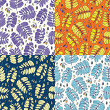 Seamless acacia floral colorful pattern. Set of colorful variations. Stock Images