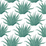 Seamless agave cactus pattern Stock Images