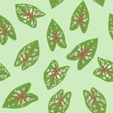 Chinese Evergreens Aglaonema Seamless Background Vector SVG Stock Photos