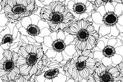 Seamless Anemone flower pattern background. Black and white with drawing line art illustration stock illustration