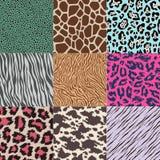 Seamless animal skin pattern. Set Royalty Free Illustration