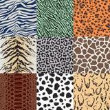 Seamless animal skin pattern. Set Stock Illustration