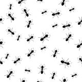 Seamless Ants. Seamless crawling black ants background royalty free illustration