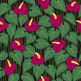 Seamless anturium flower pattern background Royalty Free Stock Photos