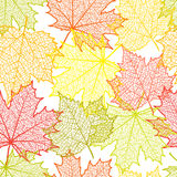 Seamless autumn background and leaves of a maple. For design stock illustration
