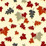 Seamless autumn background with oak and maple leaves. Stock Image