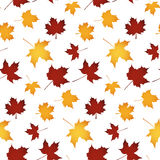 Seamless autumn leaf. Pattern over white Stock Image