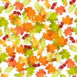 Seamless Autumn Leaf Fall Pattern Royalty Free Stock Photography