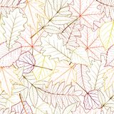 Seamless with autumn leaves Stock Image