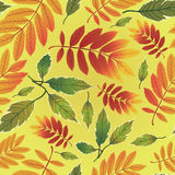 Seamless  autumn leaves background Royalty Free Stock Images