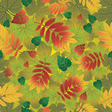 Seamless  autumn leaves background Stock Photos