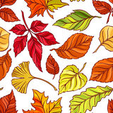 Seamless autumn leaves Stock Photo