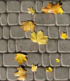 Seamless autumn leaves on cobbles. Seamless autumn yellow maple leaves on cobbles in sunshine Royalty Free Stock Image