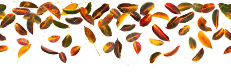Seamless autumn leaves Royalty Free Stock Images