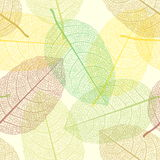 Seamless Autumn Leaves Pattern Royalty Free Stock Photos
