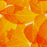 Seamless autumn leaves pattern. plus EPS10 Stock Photo