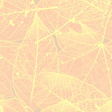 Seamless autumn leaves pattern. plus EPS10 Stock Photography