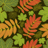 Seamless autumn leaves pattern. Thanksgiving Stock Photo