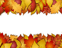 Seamless with autumn leaves Royalty Free Stock Photos