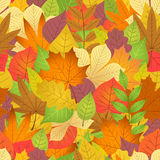 Seamless with autumn leaves on white background Stock Photos