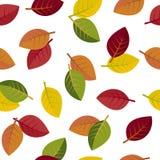 Seamless autumn leaves Stock Image