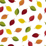 Seamless autumn leaves on a white background Stock Photography