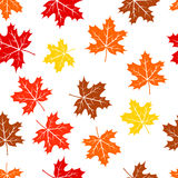 Seamless autumn maple leaves pattern. Background Vector Illustration