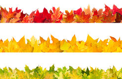 Seamless autumn maple leaves Royalty Free Stock Photography