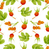 Seamless autumn pattern with berries and leaves of rosehip plants Royalty Free Stock Photo